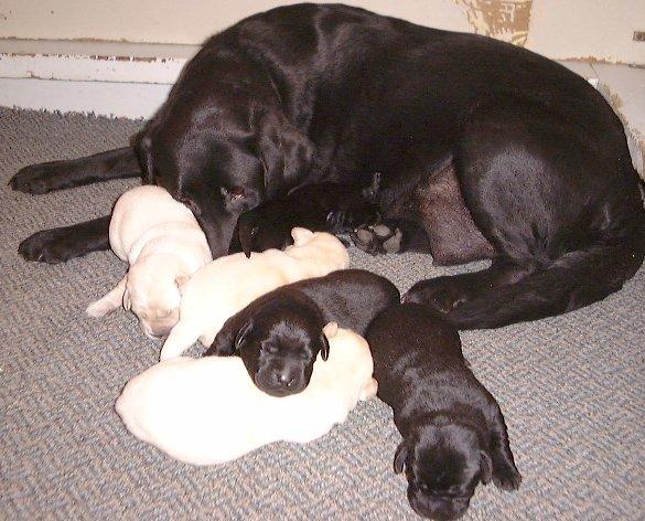Dog Training Kingston Ny